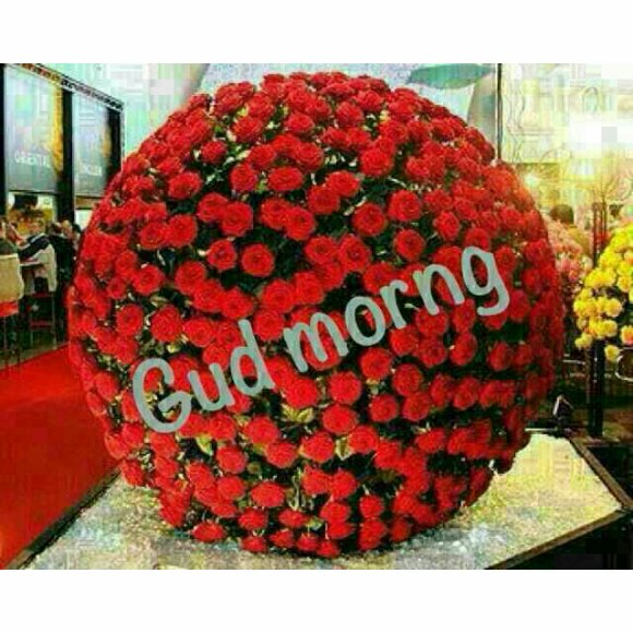 Good Morning with Flowers - Whatsapp Forwards, Jokes, Riddles and ...