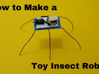 procedures how to make a insect